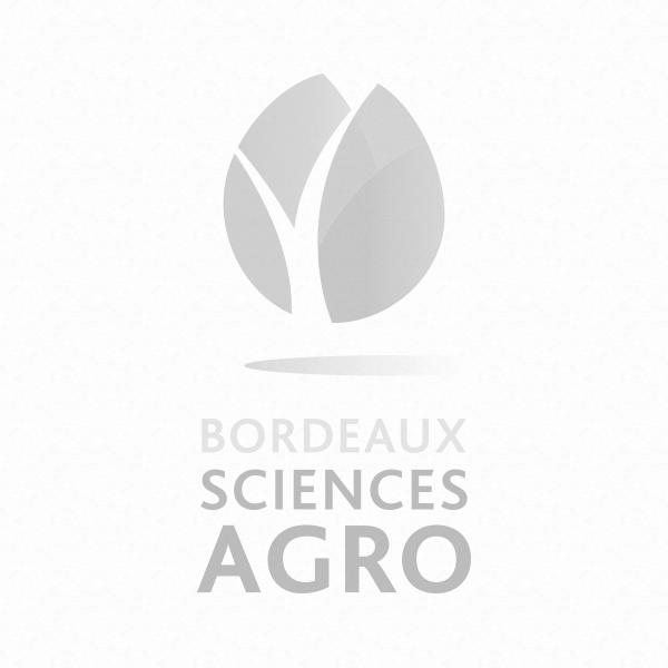 Appel à projet IDEX Bordeaux International Support