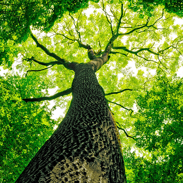 Essence et sens, analyse sensorielle appliquée au bois
