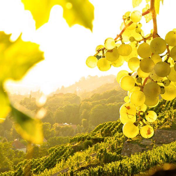 Master vigne et vin