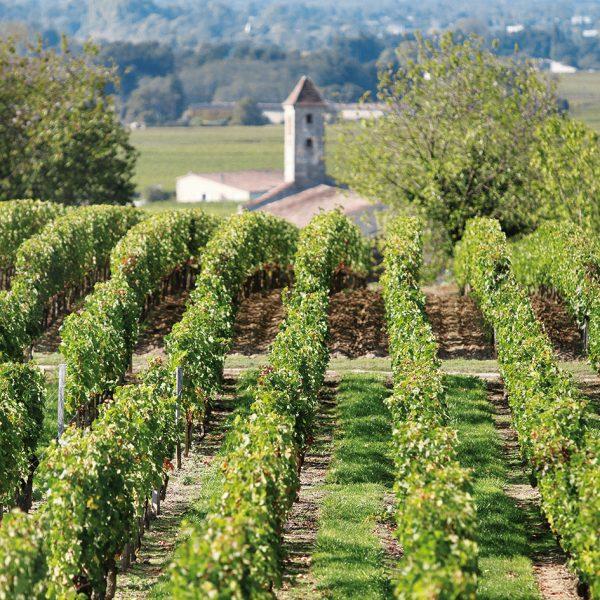 Politique financière d'une exploitation viticole