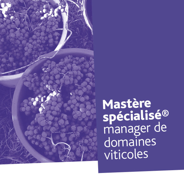 Mastère spécialisé® Manager de domaines viticoles