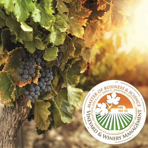 Master of Business and Science in Vineyard & Winery Management