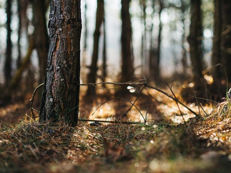 Création d'une plateforme web des acteurs forestiers – DDT24