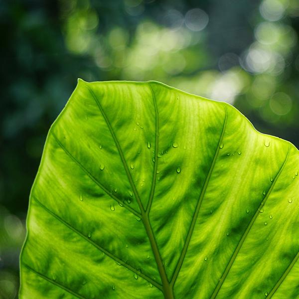 Mention «Biologie – Agrosciences»