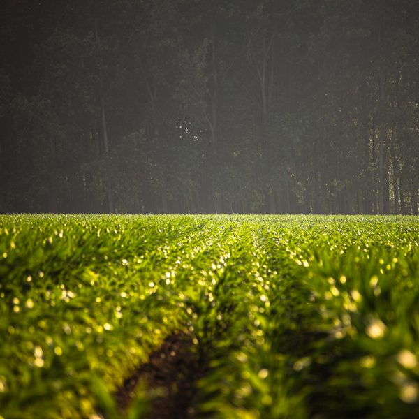 Bénéfices de l'agroforesterie