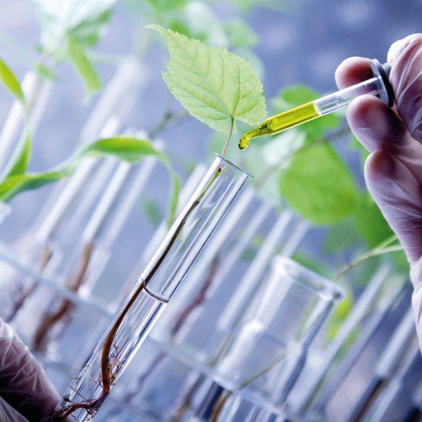 DU «Agronomie des plantes à valeur santé»