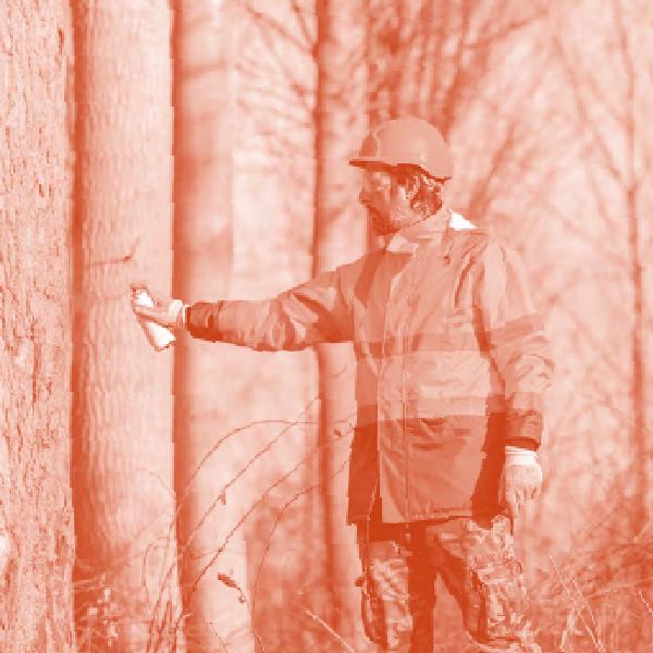 Management forestier et logistique d'approvisionnement en bois