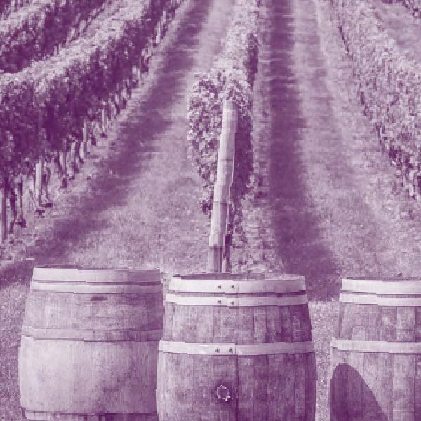 Viticulture-œnologie