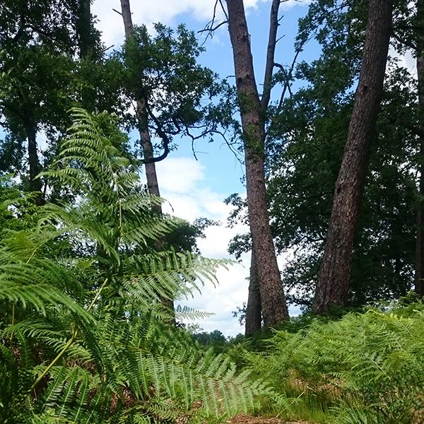 La forêt des Agreaux