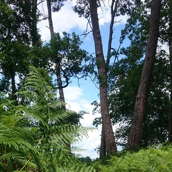 Changements globaux et management forestier