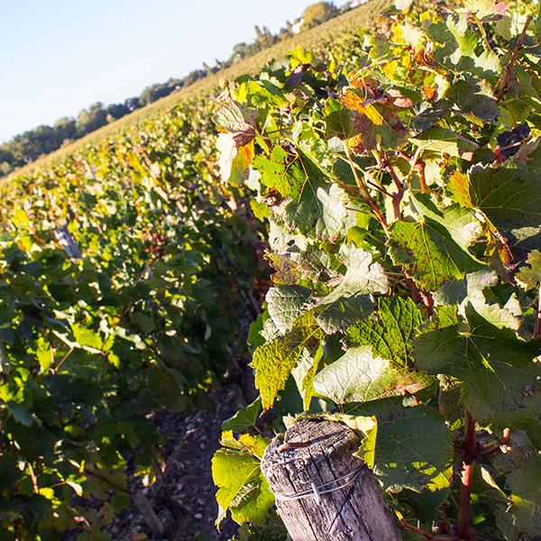Le château Luchey-Halde, un vignoble agroécologique