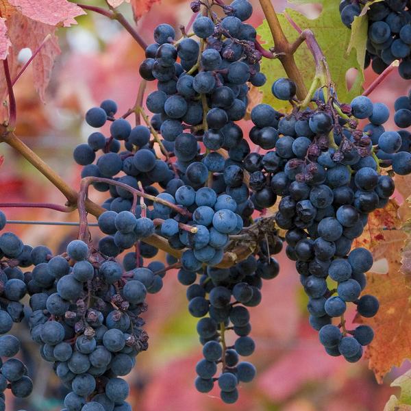 American Association of Wine Economists : conférence internationale à Bordeaux