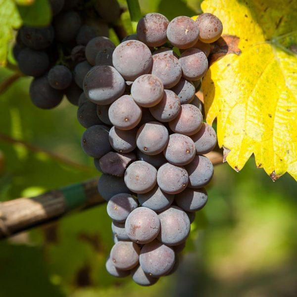 [Médias] REPLAY Château Luchey-Halde, un vignoble dans la ville France 3 NoA