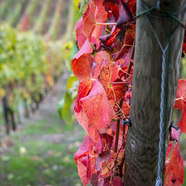 Valorisation des terroirs viticoles