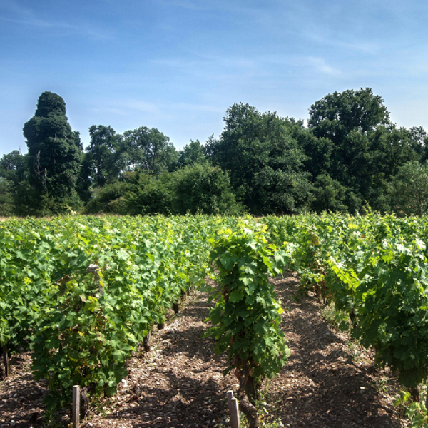 Journées de l'agroécologie au vignoble