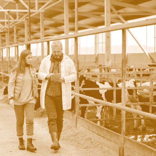 Management et installation en exploitation agricole