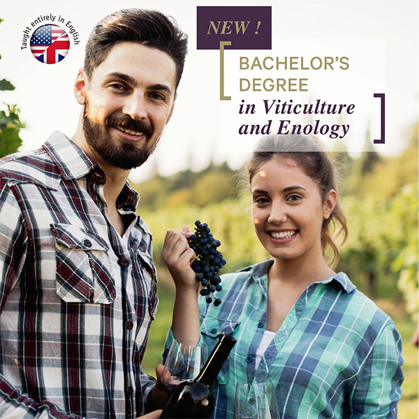 Bachelor's degree in Viticulture and Enology