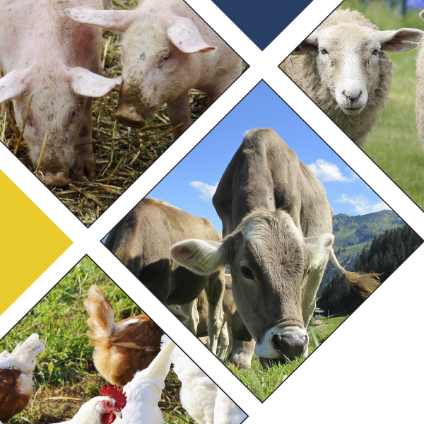 Master GloQual : Global Quality in European Livestock Production