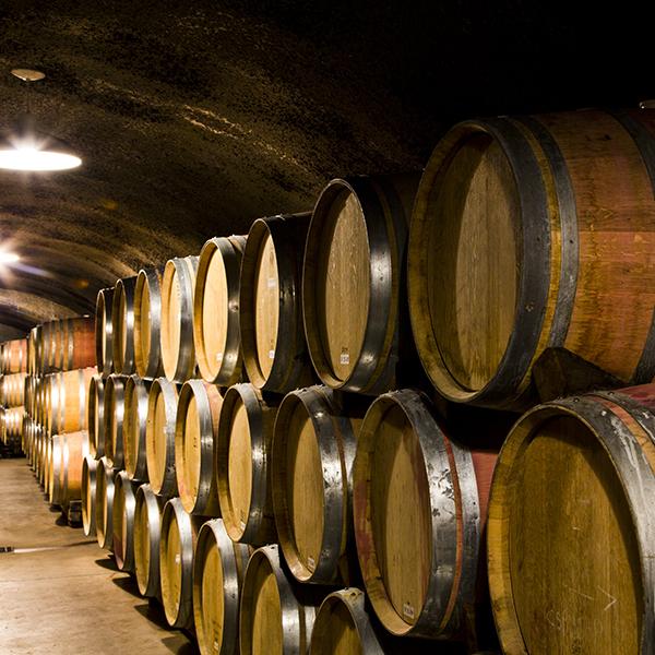 [Mastère spécialisé] Devenir manager de domaines viticoles ? Il est encore temps de s'inscrire !
