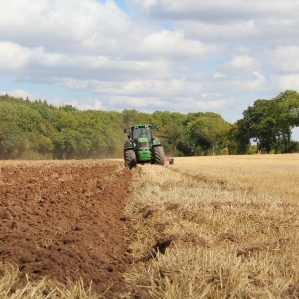 [Publication recherche]L'azote : un élément clé pour le développement de l'agriculture biologique